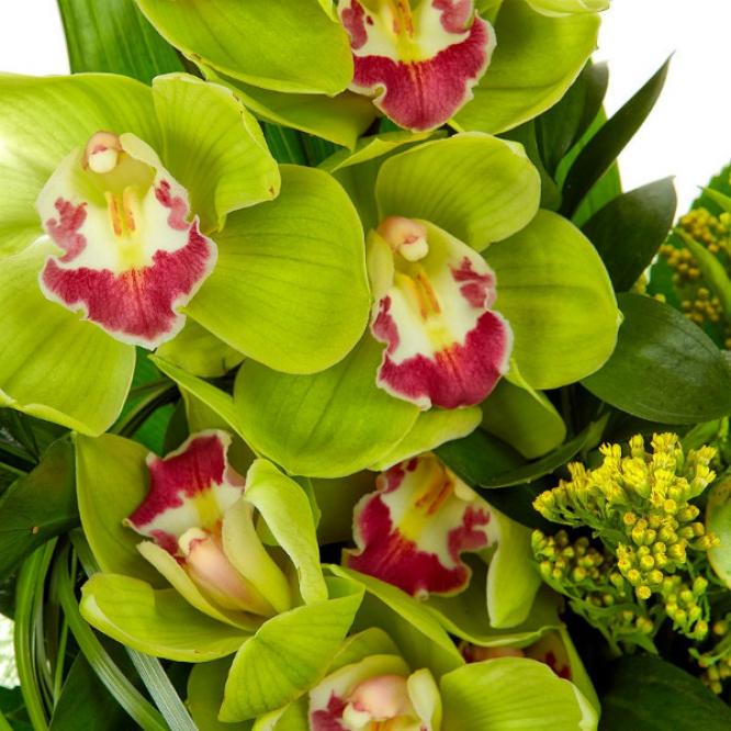 Букет цветов из зеленой орхидеи, пестрой аралии, рускуса, берграсса, солидаго и аспидистры №35 с доставкой.