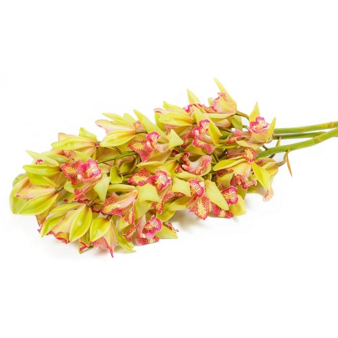 """Букет цветов из трех веток орхидеи """"Цимбидиум"""" №49 с доставкой."""