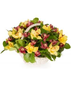 """Букет-корзина из желтой и красной орхидеи """"Цимбидиум"""" и салала №101"""