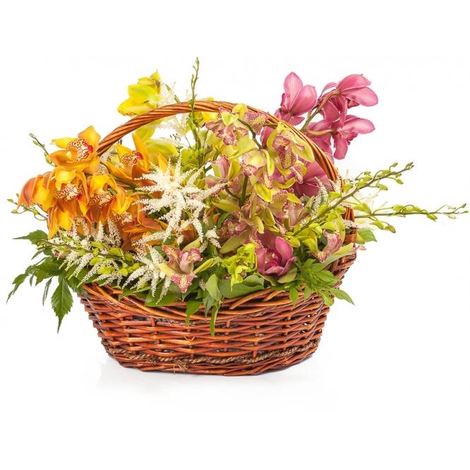 """Букет-корзина из разноцветной орхидеи """"Цимбидиум"""", салала, астильбы и орхидеи """"Дендробиум"""" №104"""