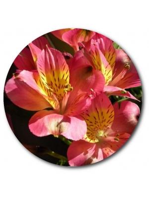 Поштучно ветка розовой альстромерии с доставкой №28