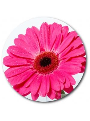 Поштучно розовая гербера с доставкой №7