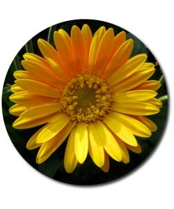Поштучно желтая гербера с доставкой №13