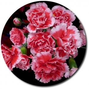 Поштучно ветка розовой гвоздики с доставкой №38