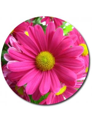 Поштучно ветка розовой хризантемы (экстра класс, 75 сантиметров) с доставкой №15