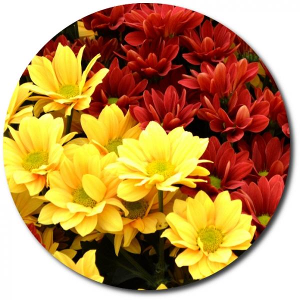 Поштучно ветка красной и желтой хризантемы с доставкой №23