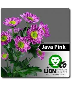 Поштучно ветка розовой хризантемы (экстра класс, 75 сантиметров) с доставкой №22