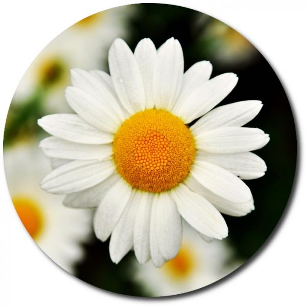 Поштучно ветка белой хризантемы с доставкой №16