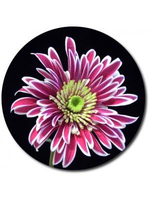 Поштучно ветка бело-розовой хризантемы (экстра класс, 70 сантиметров) с доставкой №17