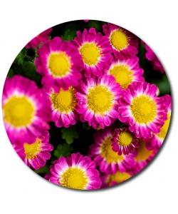 Поштучно ветка розовой хризантемы (экстра класс, 75 сантиметров) с доставкой №18