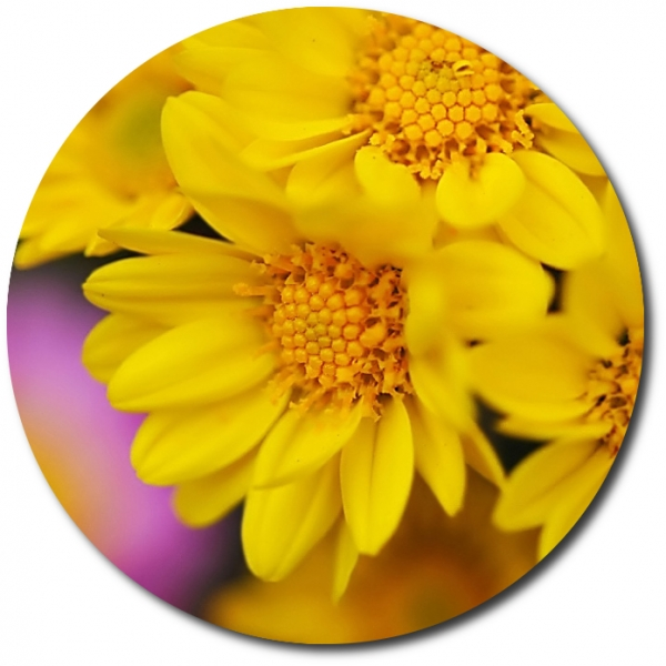 Поштучно ветка желтой хризантемы с доставкой №21