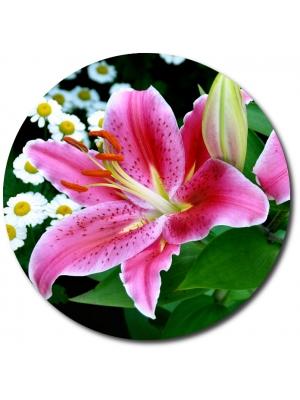 Букеты из лилии (6)