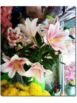 Поштучно ветка розовой лилии с доставкой №14