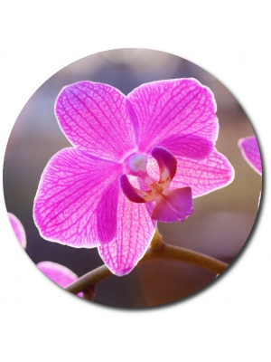Поштучно розовая орхидея (1 цветок) с доставкой №25