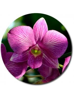 Поштучно розовая орхидея (1 цветок) с доставкой №26