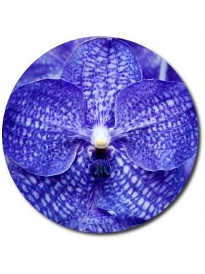 Поштучно синяя орхидея Ванда (1 цветок) с доставкой №27