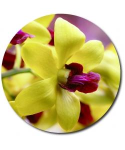 Поштучно желтая орхидея (1 цветок) с доставкой №28