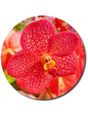 Поштучно красная орхидея (1 цветок) с доставкой №29