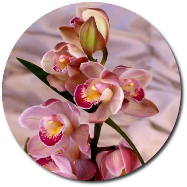 Поштучно ветка розовой орхидеи (7 цветков) с доставкой №30