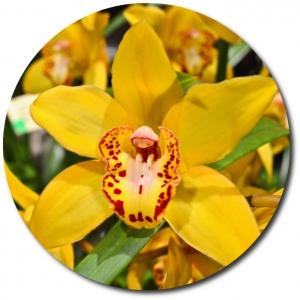 Поштучно желтая орхидея (1 цветок) с доставкой №31