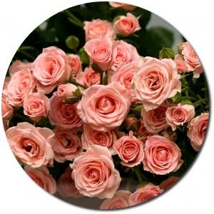Поштучно ветка розовой кустовой розы с доставкой.