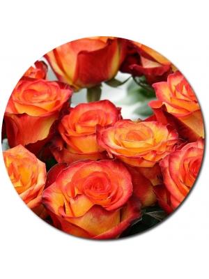 Поштучно оранжевая роза Баллада (экстра класс, 70 сантиметров) с доставкой.
