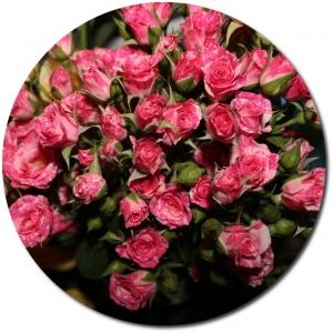 Поштучно ветка розовой кустовой розы №2 с доставкой.