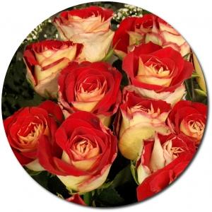 Поштучно бело-красные розы с доставкой.