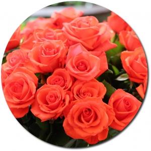 Поштучно ветка розовых роз №3 с доставкой.