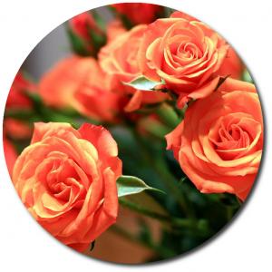 Поштучно ветка оранжевых роз №5 с доставкой.
