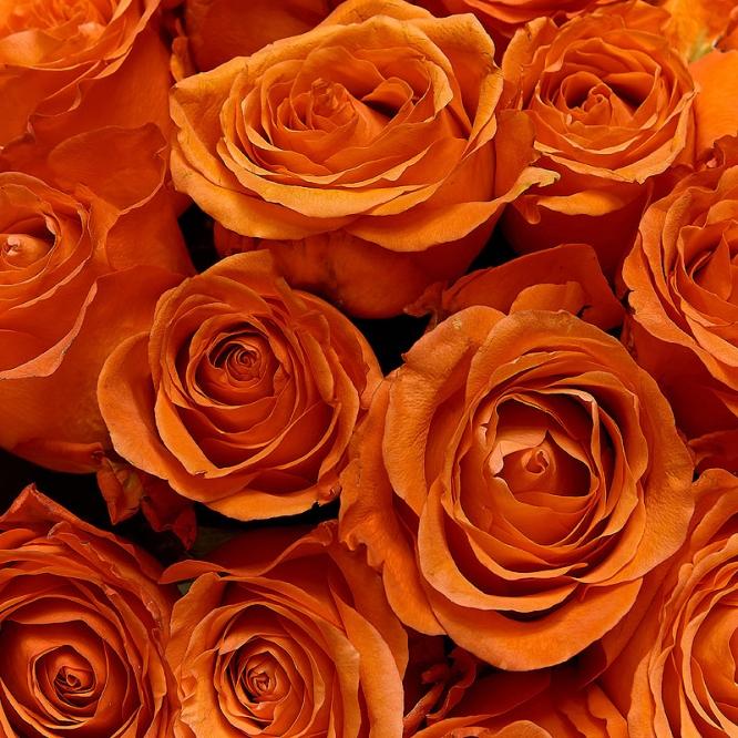 Поштучно рыжая роза (экстра класс, 70 сантиметров) с доставкой №3