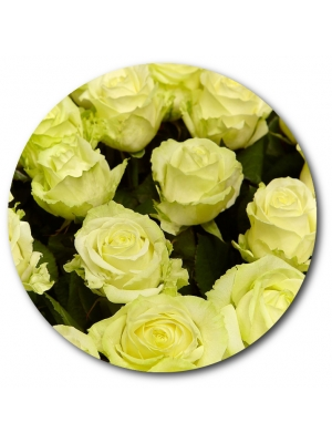 Поштучно белая роза с доставкой №5