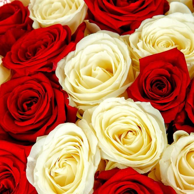 Поштучно красная и белая роза  (экстра класс, 70 сантиметров) с доставкой №6