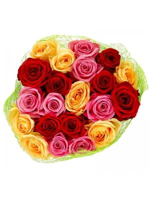 Поштучно розовая, красная и кремовая роза (экстра класс, 70 сантиметров) с доставкой №9