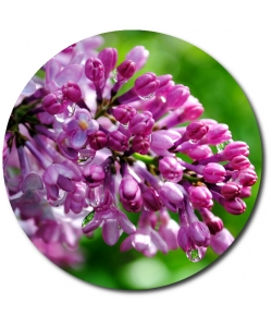 Поштучно ветка фиолетовой сирени с доставкой №39