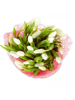 Поштучно белые тюльпаны с доставкой по Киеву.