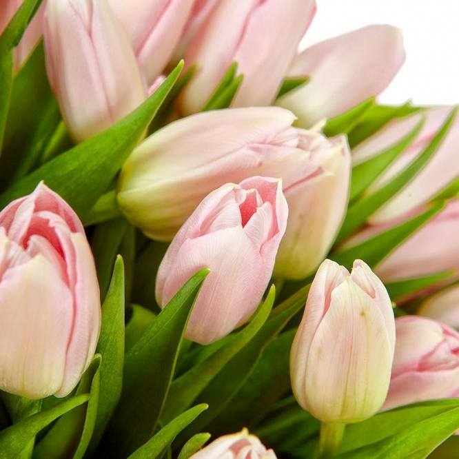 Поштучно розовые тюльпаны с доставкой по Киеву.