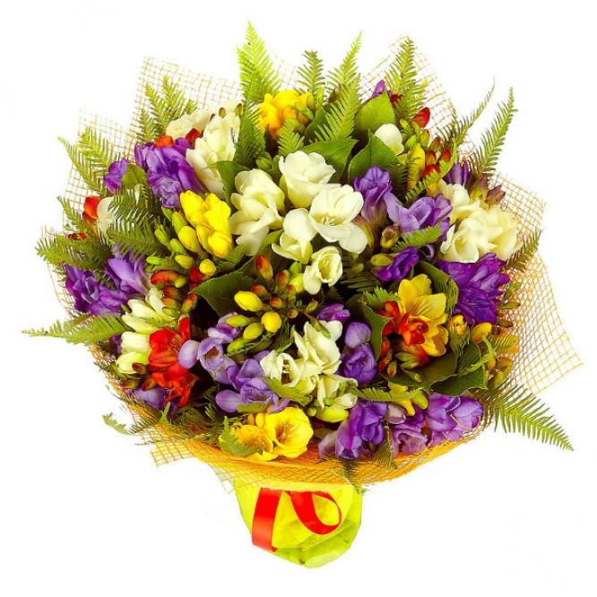 Букет цветов из разноцветной фрезии (51 шт.), салала и амбреллы №26 с доставкой.