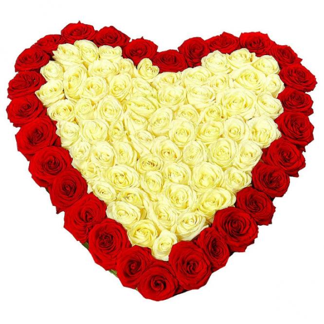 Букет-сердце из белых и красных роз (75 шт.), а также аспидистры №85