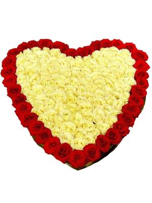 Букет-сердце из белых и красных роз (151 шт.), а также аспидистры №86