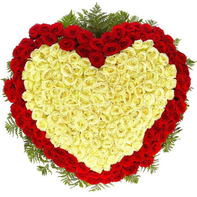 Букет-сердце из белых и красных роз (301 шт.), а также папоротника №87