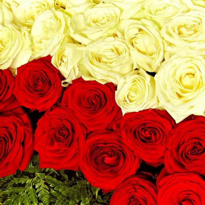 Букет-сердце из белых и красных роз (501 шт.), а также папоротника №88