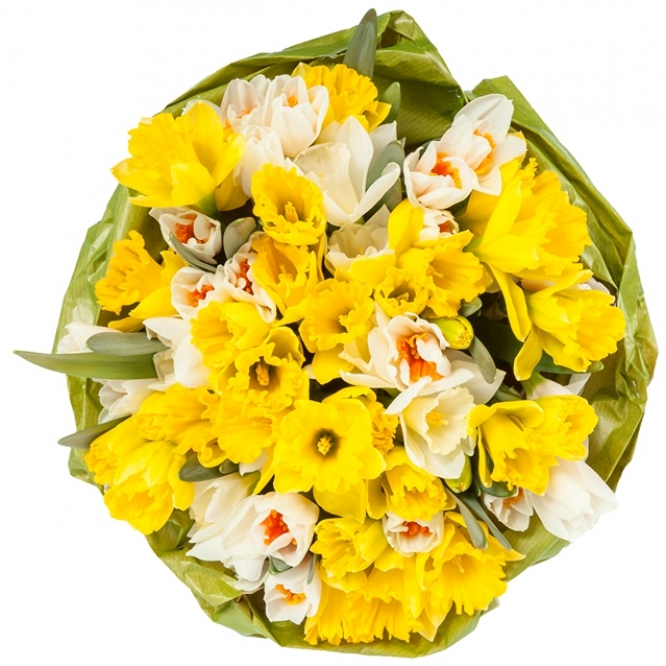 Букет цветов из разноцветных нарциссов (61 шт.) №47 с доставкой.