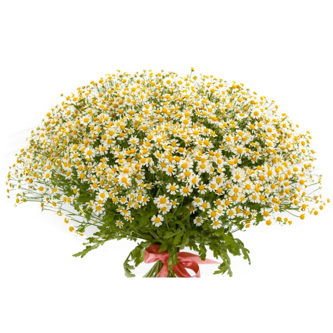 Доставка цветов букет из ромашек вязаный подарок на 8 марта крючком видео