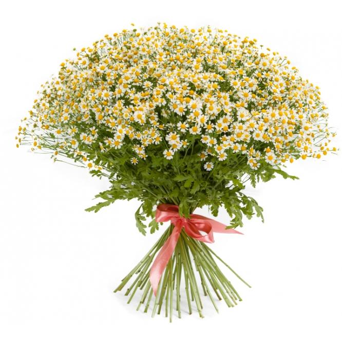 Букет цветов из ромашек (51 шт.) №50 с доставкой.