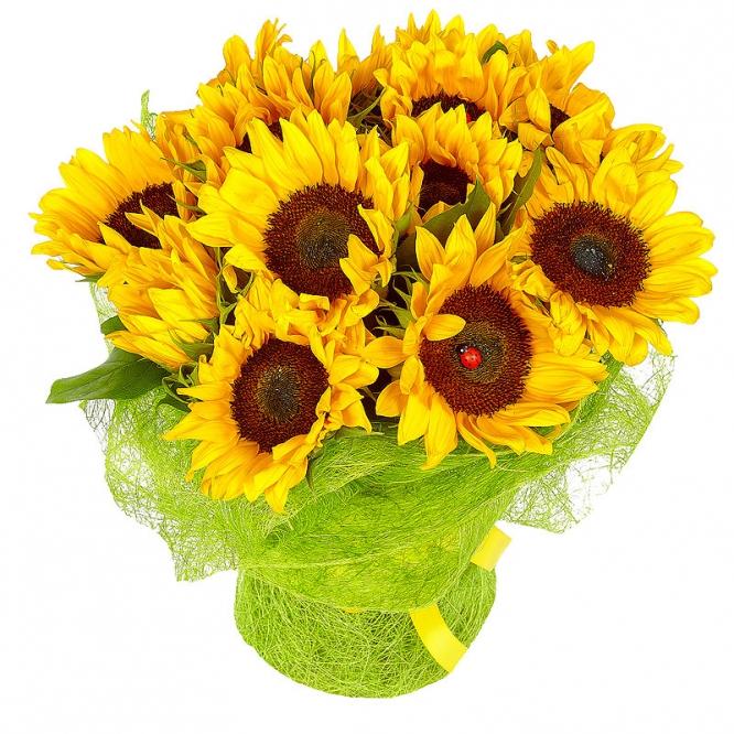 Букет цветов из темно-желтого подсолнуха (13 шт.) и салала №51 с доставкой.