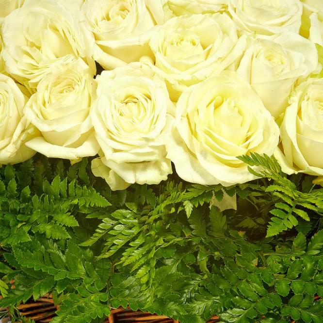 Букет-корзина из белых роз (101 шт.) и папоротника №12