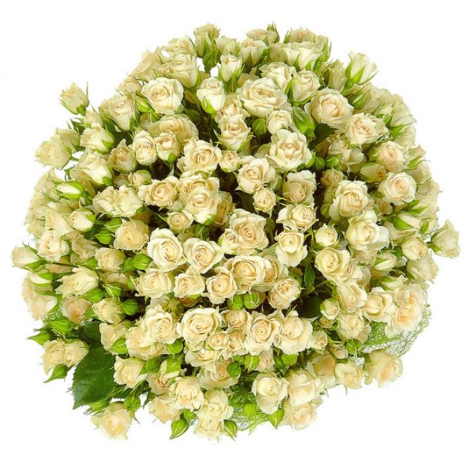 Букет цветов из кремовой кустовой розы №31 (35 шт.) с доставкой.