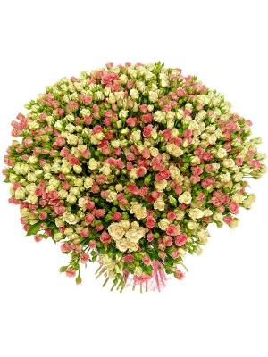 Букет цветов из кремовых и розовых кустовых роз №28 (101 шт.) с доставкой.