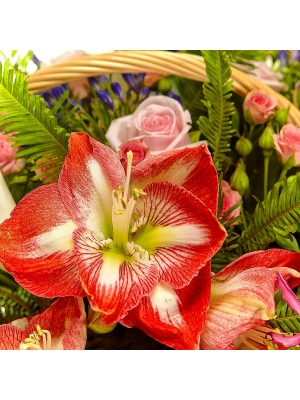Букет-корзина из розовых роз, белой каллы, синего агапантуса и красно-белого амариллиса №26